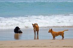 在休息在海洋的波浪的一个沙滩的手段的三条狗 免版税图库摄影