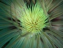 在休闲下潜期间的五颜六色的管银莲花属海在东姑阿都拉曼公园,亚庇 沙巴,马来西亚 r 免版税图库摄影