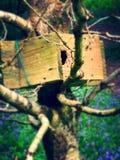 在会开蓝色钟形花的草中的鸟箱子 免版税库存图片