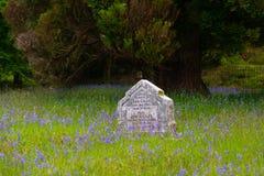 在会开蓝色钟形花的草的墓碑调遣 库存照片
