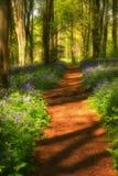 在会开蓝色钟形花的草路径影子间 库存照片