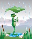 在伞叶子下的青蛙 免版税库存照片
