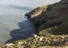 在伟大的Orme的剧烈的海岸线,兰迪德诺,北部威尔士,英国 库存图片