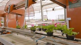 在传动机线的花 工业内部 五颜六色的花自现代温室 现代自动化的温室 股票录像