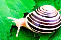 在传单的蜗牛 免版税库存图片