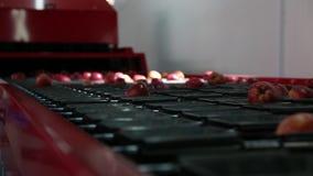在传送带的干净和新鲜的苹果在食品加工设施,为自动化的包装准备 健康果子,食物 股票录像