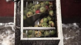 在传送带的苹果 股票录像