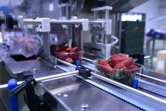 在传送带的草莓 免版税图库摄影