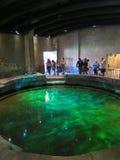 在伦敦博物馆的鲜绿色水池  免版税图库摄影