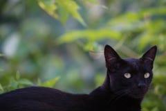 在似猫的神色之外的方式 免版税图库摄影