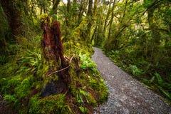 在位于峡湾国家公园的湖玛丽亚秋天的轨道, Milford Sound,新西兰 图库摄影