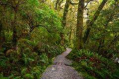 在位于峡湾国家公园的湖玛丽亚秋天的轨道, Milford Sound,新西兰 库存图片