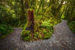在位于峡湾国家公园的湖玛丽亚秋天的轨道, Milford Sound,新西兰 库存照片
