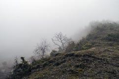 在低云彩的树木丛生的山坡与在一个风景风景视图的薄雾覆盖的常青针叶树 库存图片