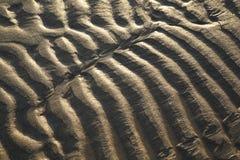 在低太阳的沙子波纹 免版税库存照片