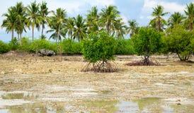 在低潮期间的美洲红树树 与棕榈树和美洲红树的热带海滨 免版税库存照片