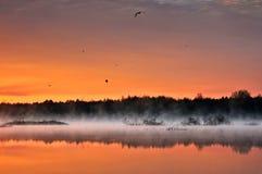 在低薄雾盖的狂放的池塘 库存图片
