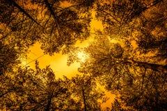 在低角度看见的森林里在春天在清楚的天空下 免版税库存图片