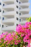 在住宅复合体背景的桃红色开花的九重葛  免版税库存照片
