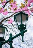 在佐仓开花下的绿色灯笼 图库摄影
