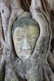在佛教寺庙的菩萨头在Ayuthaya,泰国 库存图片
