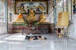 在佛教寺庙,泰国的休眠狗 免版税图库摄影