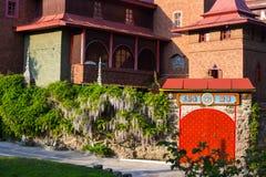在佛教templ附近的紫藤 免版税库存图片
