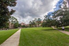 在佛罗里达州立大学的Landis绿色 库存照片