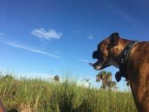 在佛罗里达沼泽地尾随走在一个领域 库存图片