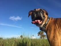 在佛罗里达沼泽地尾随走在一个领域 免版税库存照片