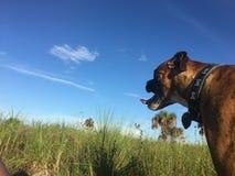 在佛罗里达沼泽地尾随走在一个领域 免版税库存图片