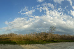 在佛罗里达沼泽地风景的美好的场面 免版税库存照片