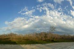 在佛罗里达沼泽地风景的美好的场面 库存照片
