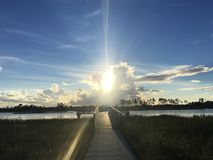 在佛罗里达沼泽的杉木沼地自然地区 库存图片