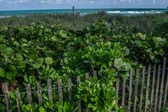 在佛罗里达海岸的被操刀的植被 库存照片