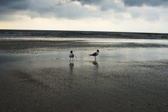 在佛罗里达海滩的日落场面 两只鸟看起来哀伤 库存照片
