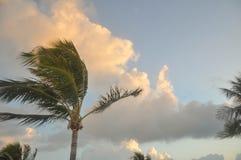 在佛罗里达海滩的棕榈树 免版税库存图片