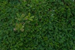 在佛罗里达Coast2的被操刀的植被 库存图片