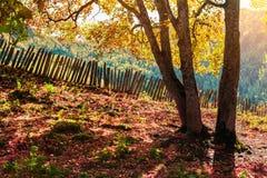 在作为背景使用的高加索山脉的五颜六色的秋天视图 库存图片