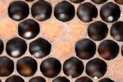 在使用中巢的梳子 免版税库存图片