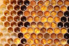 在使用中花粉的梳子 图库摄影