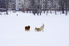 在使用在街道的一种好心情的两条狗 免版税图库摄影