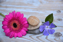 在使用的木头的三块禅宗石头与紫色和桃红色花 免版税库存照片