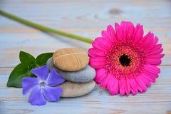 在使用的木头的三块禅宗石头与紫色和桃红色花 免版税库存图片