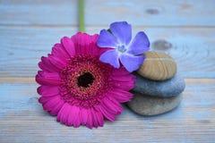 在使用的木头的三块禅宗石头与紫色和桃红色花 库存照片