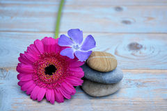 在使用的木头的三块禅宗石头与紫色桃红色花 免版税库存照片