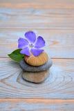 在使用的木头的三块禅宗石头与紫色花 免版税库存图片