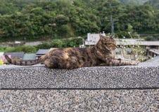 在侯硐猫村庄,瑞芳区的布朗猫 库存图片