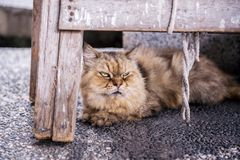 在侯硐猫村庄,瑞芳区,新的台北的布朗猫 免版税库存图片