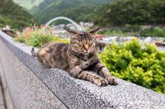 在侯硐猫村庄,瑞芳区,新的台北的布朗猫 免版税图库摄影